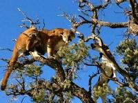 Dog-&-Lion-