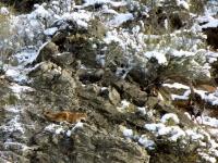 In-The-Rocks-