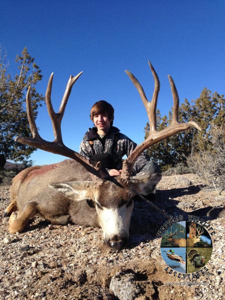 Nevada Mule Deer Western Wildlife Adventures